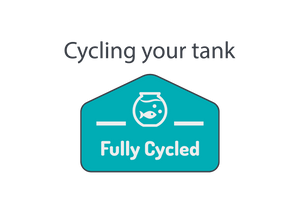 How to cycle a tank and get it ready for your fish