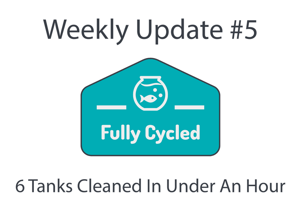 Weekly Update #5 - 6 Tanks cleaned in under an hour!