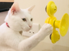 Cat vs Fidget Spinner - These 5 Cats are Mesmerized by Fidget Spinners!