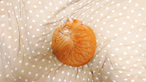 why do cats curl up in a ball
