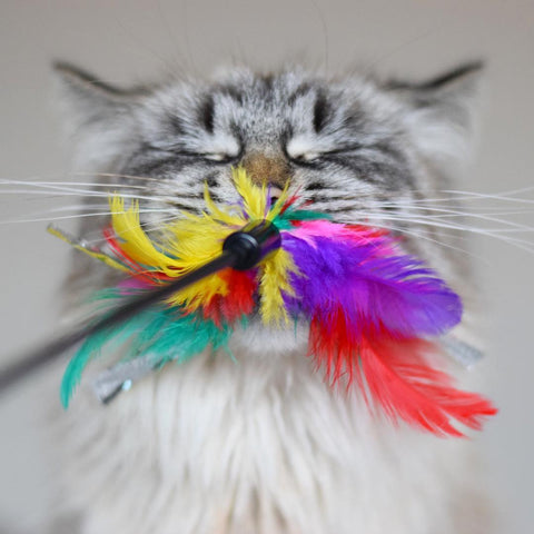 Why do cats love feathers
