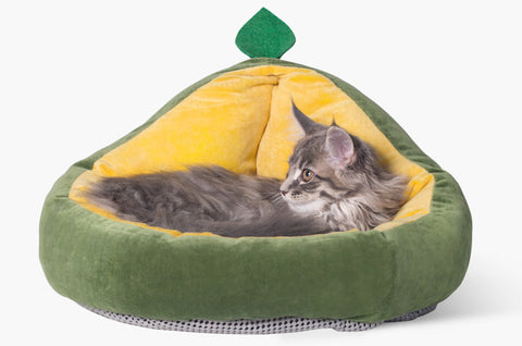 Why do cats like curl up in a ball