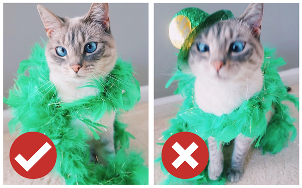 How to get my cat to like dressing up?
