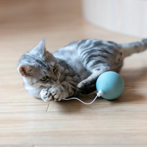 Pidan Auto-play Electric Balloon Cat Toy - Petites Paws