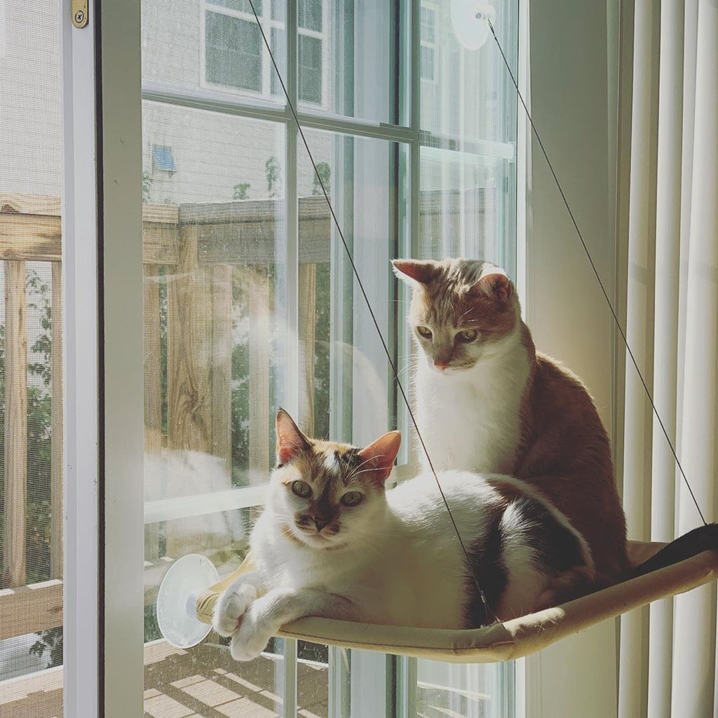 Window-Mounted Cat Hammock - Petites Paws