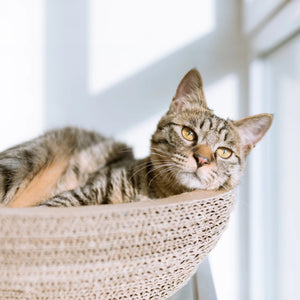 Cozy Cat Scratcher Bowl - Petites Paws