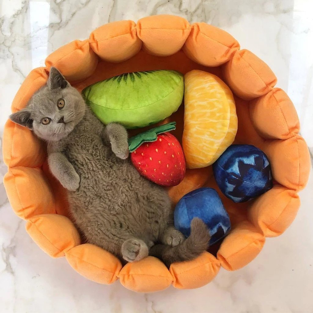 Cute Fruit Tart Cat Bed - Petites Paws
