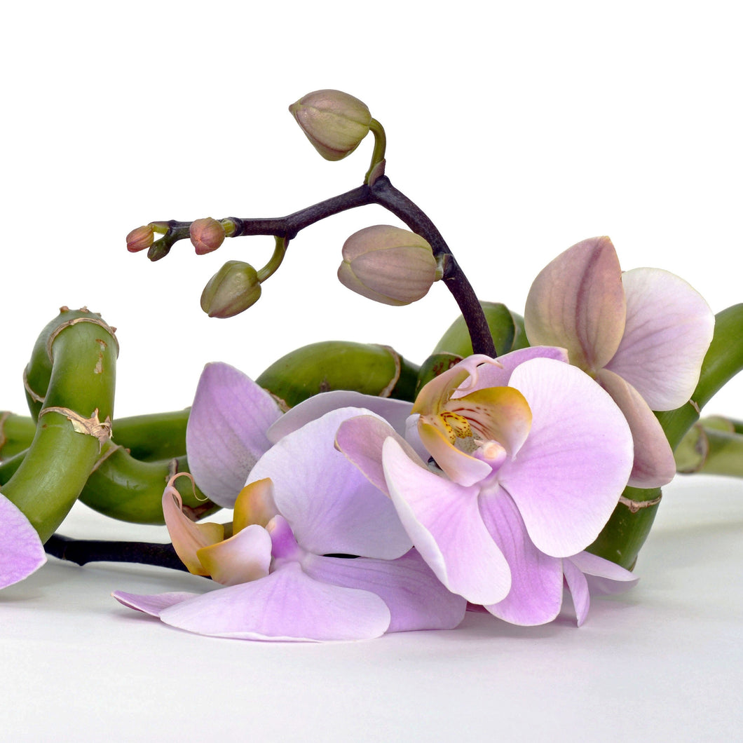 Bamboo & Orchid