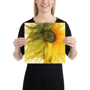 Unframed Poster:  September Sunflower