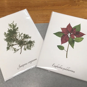 Two white cards. One with an illustration of a red cedar and the other with an poinsettia.