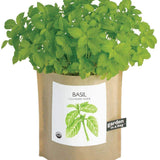 A basil plant growing out of a brown bag.