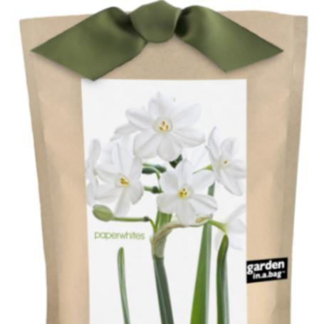 A brown bag of paperwhite growing set.