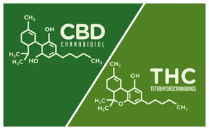 CBD vs THC – Understanding Key Differences