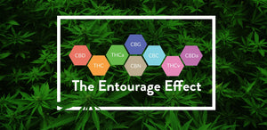 What is the Entourage Effect?