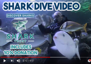 Shark Dive Video