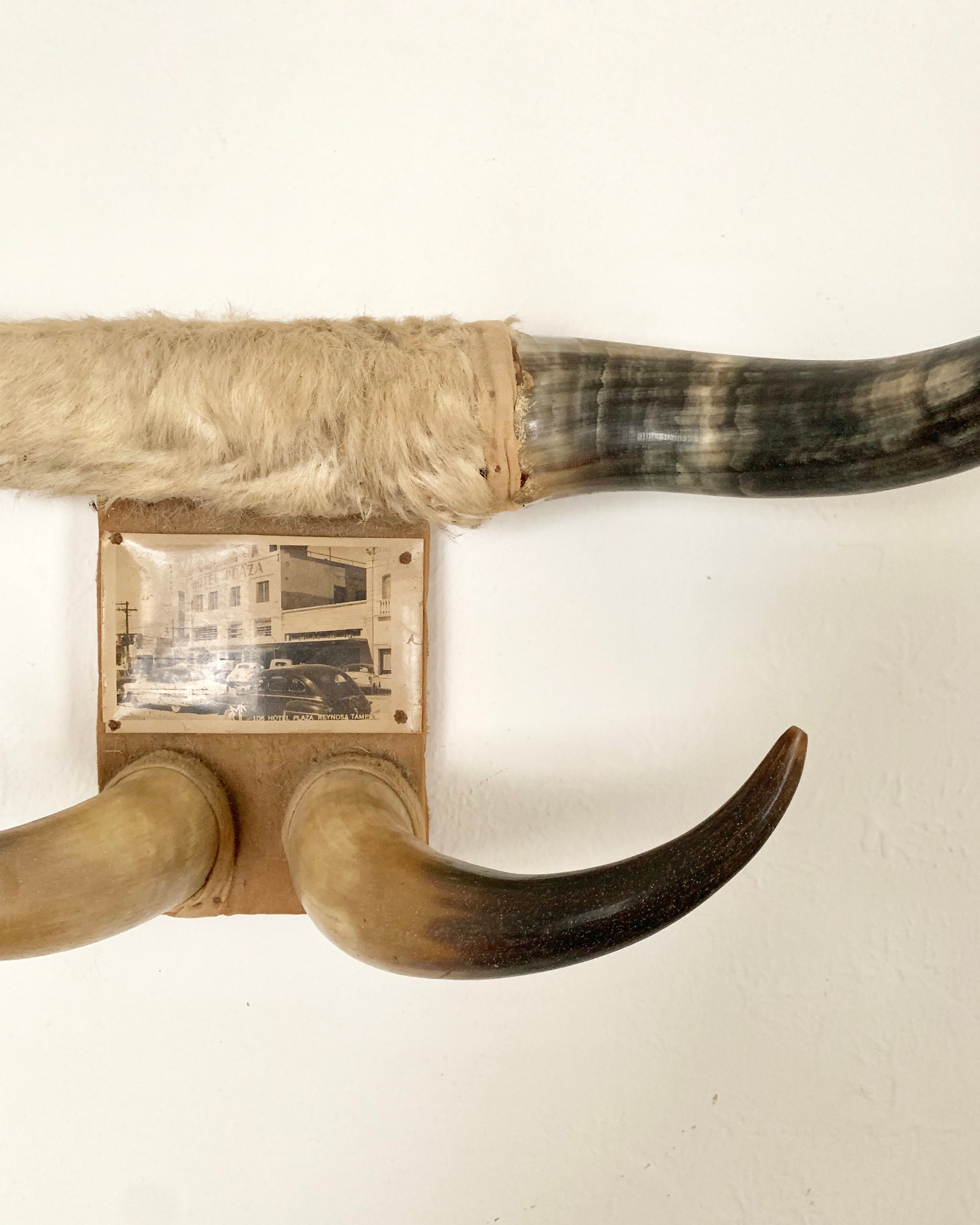 Vintage Bull Horns With Photo