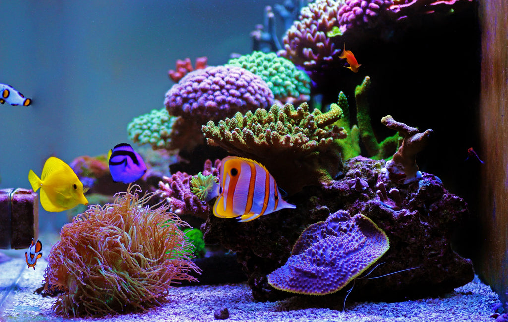 Tank Hack: Five Non-Drilled Aquarium Add-Ons to Improve Your Tank
