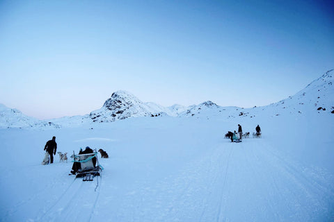 Emil sledding in Greenland