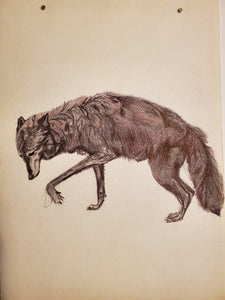 Wolf Drawing on Arches Paper