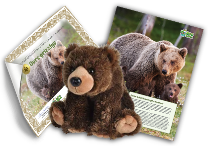 Ensemble d'adoption de l'ours grizzly – Peluche
