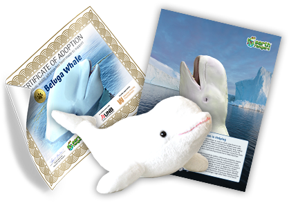 Beluga Whale Adoption Kit - Plush Bundle