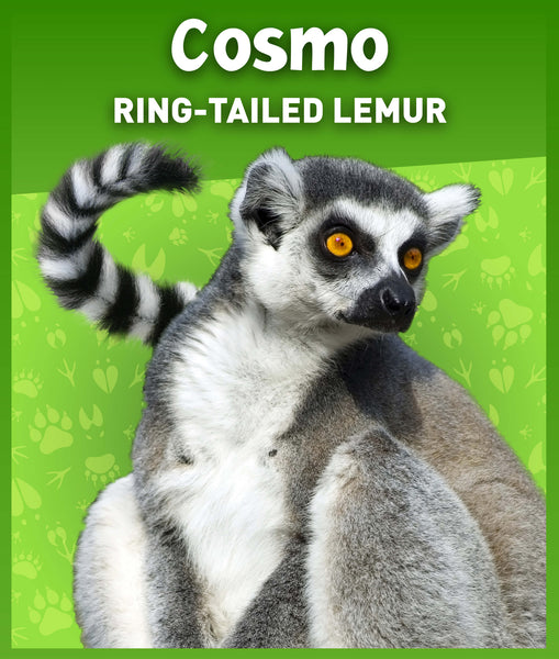 Ring-Tailed Lemur Stuffed Animal - 8""