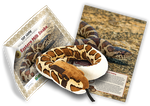 Eastern Milksnake Adoption Kit - Plush Bundle