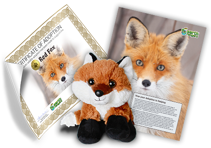 Red Fox Adoption Kit - Plush Bundle