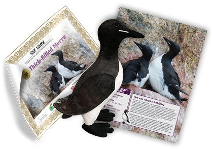 Thick-billed Murre Adoption Kit - Plush Bundle