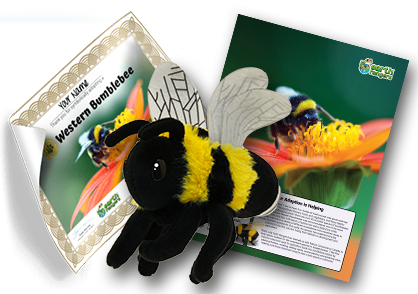 Western Bumblebee Adoption Kit - Plush Bundle