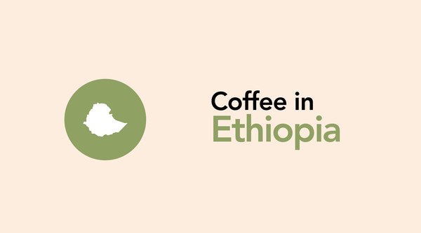 Ethiopia: A Guide to My Favorite Coffee Origin