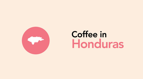 Honduras: From Underdog to Central American Favorite