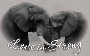 Wood Frames - Zoo - Love Is Strong