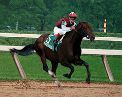 Bernardini Winning 2006 Travers Stakes by Nick Martinez