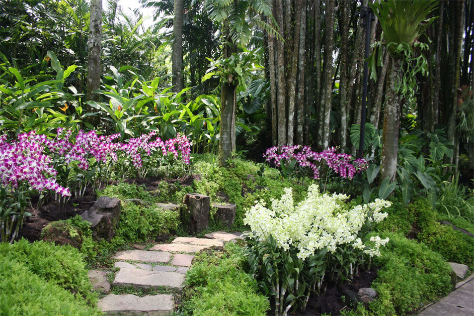 Travel Singapore Orchid Garden