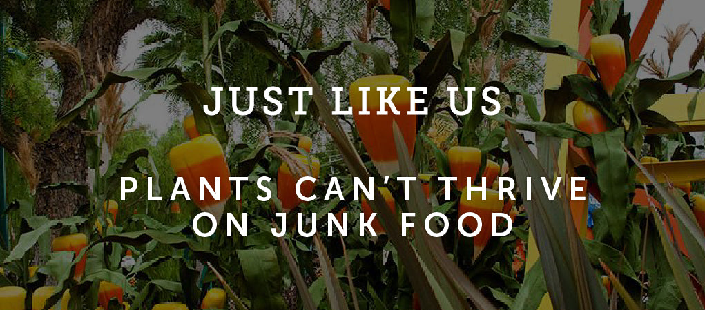 Just Like Us, Plants Don't Thrive on Junk Food