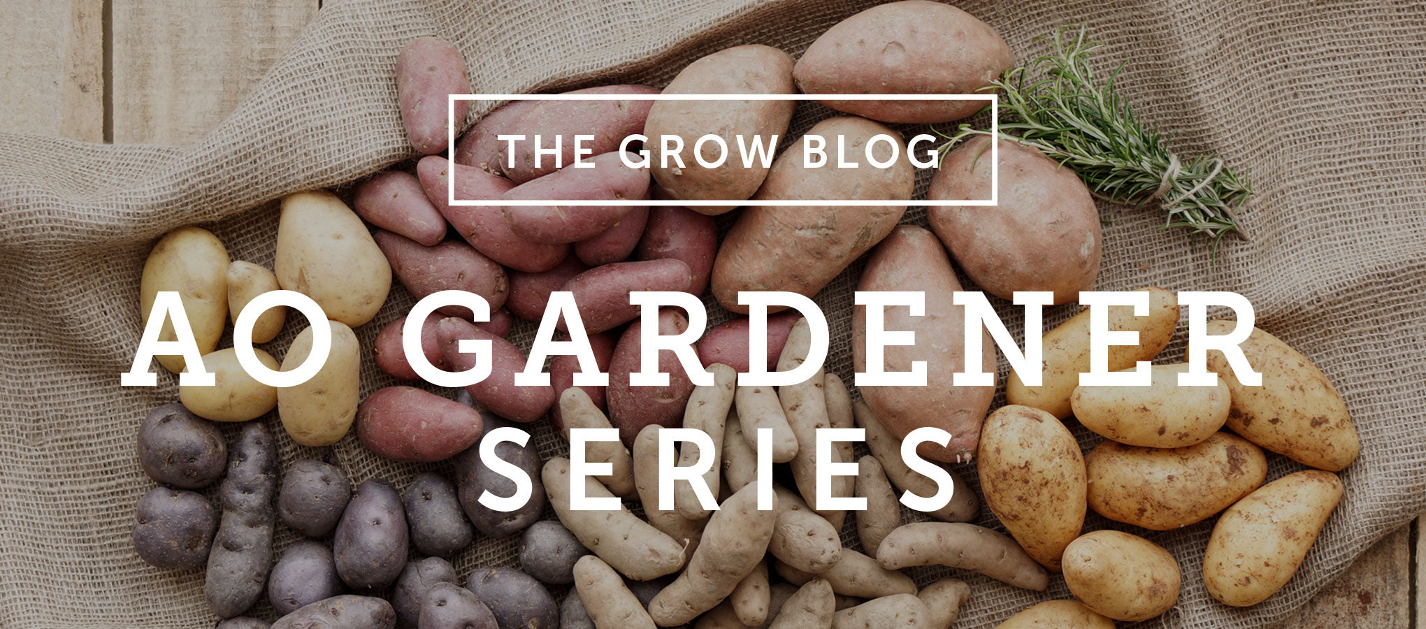 AO Gardener Series: Potatoes Part I – Planning to Shop