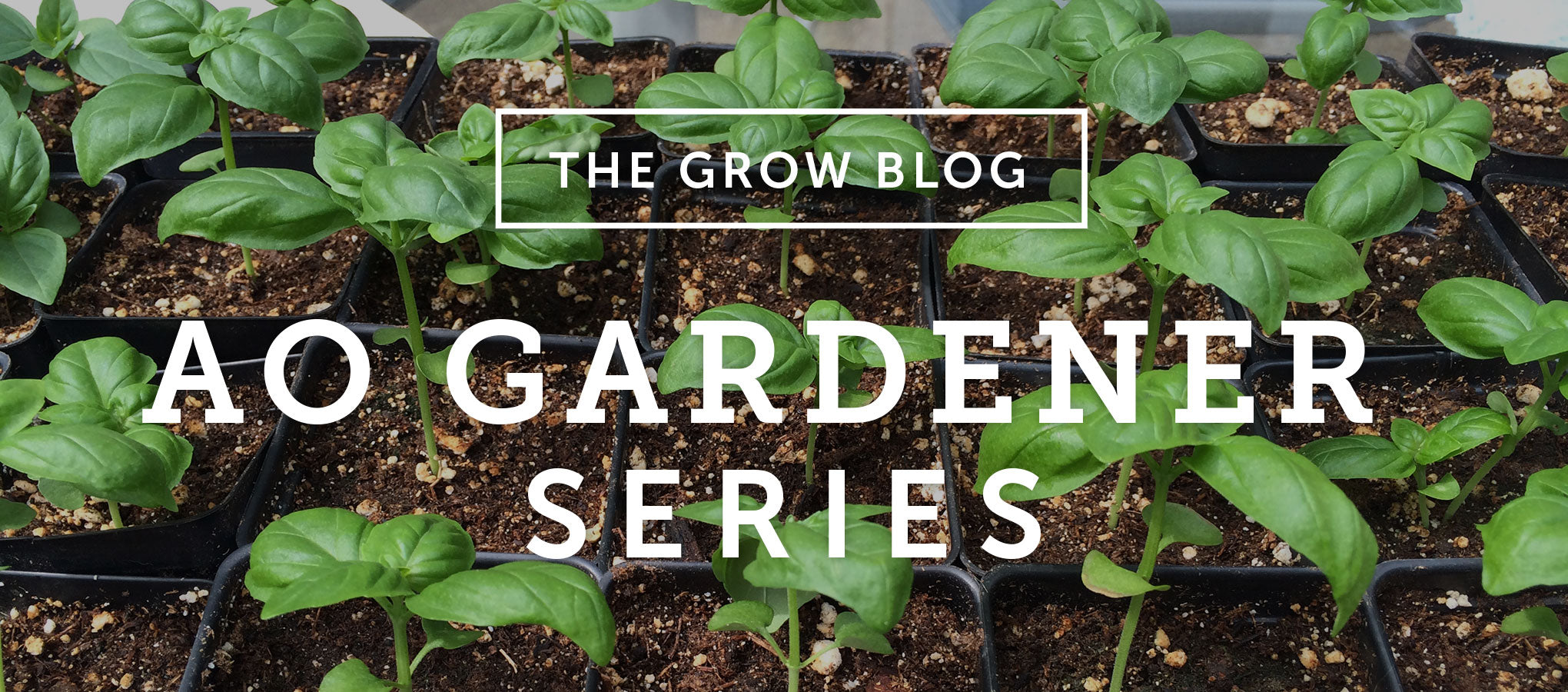 AO Gardener Series: What is 'Hardening Off' Anyway?