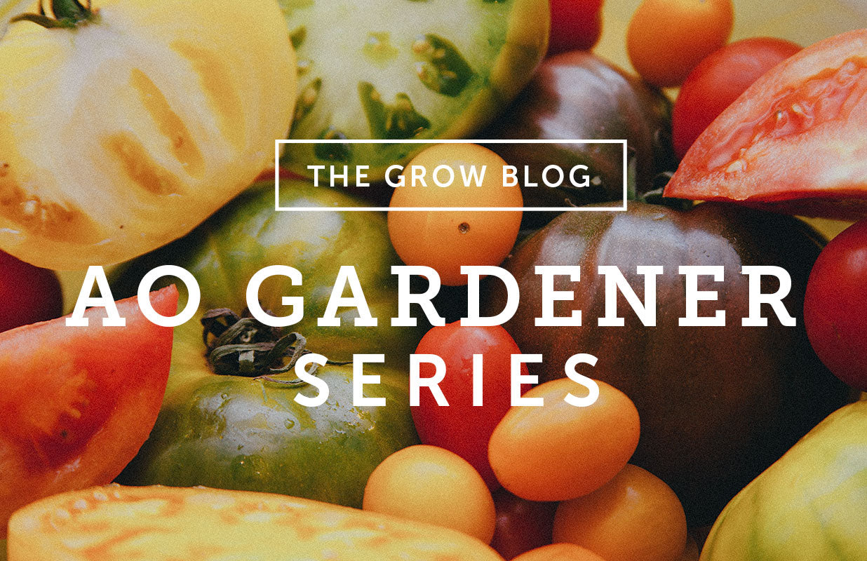 AO Gardener Series: Tomato TLC in Early June