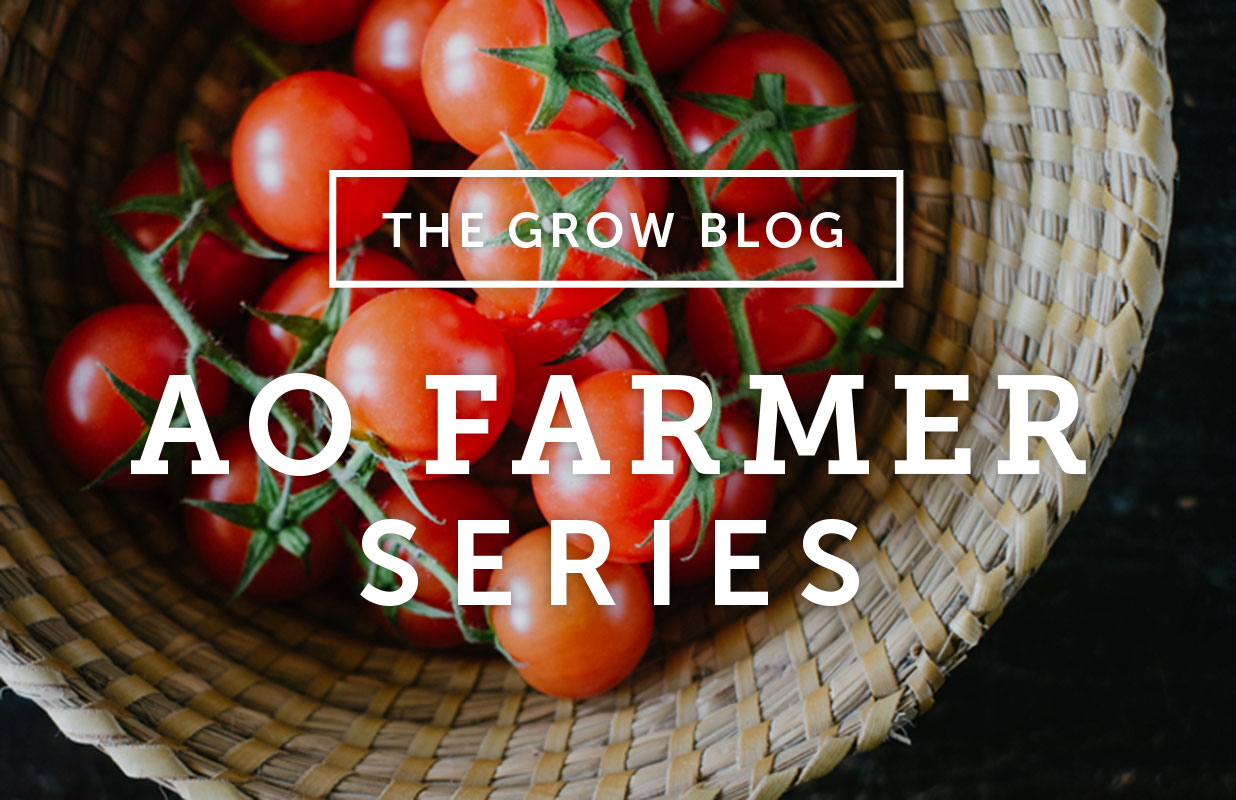 AO Farmer Series: Pruning & Trellising Tomatoes