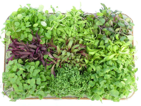 Micro Greens, Spicy Blend