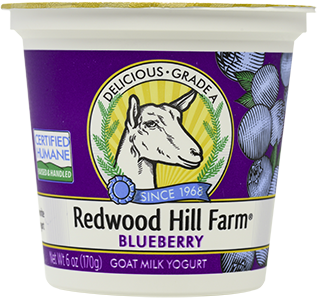 Blueberry Goat Milk Yogurt