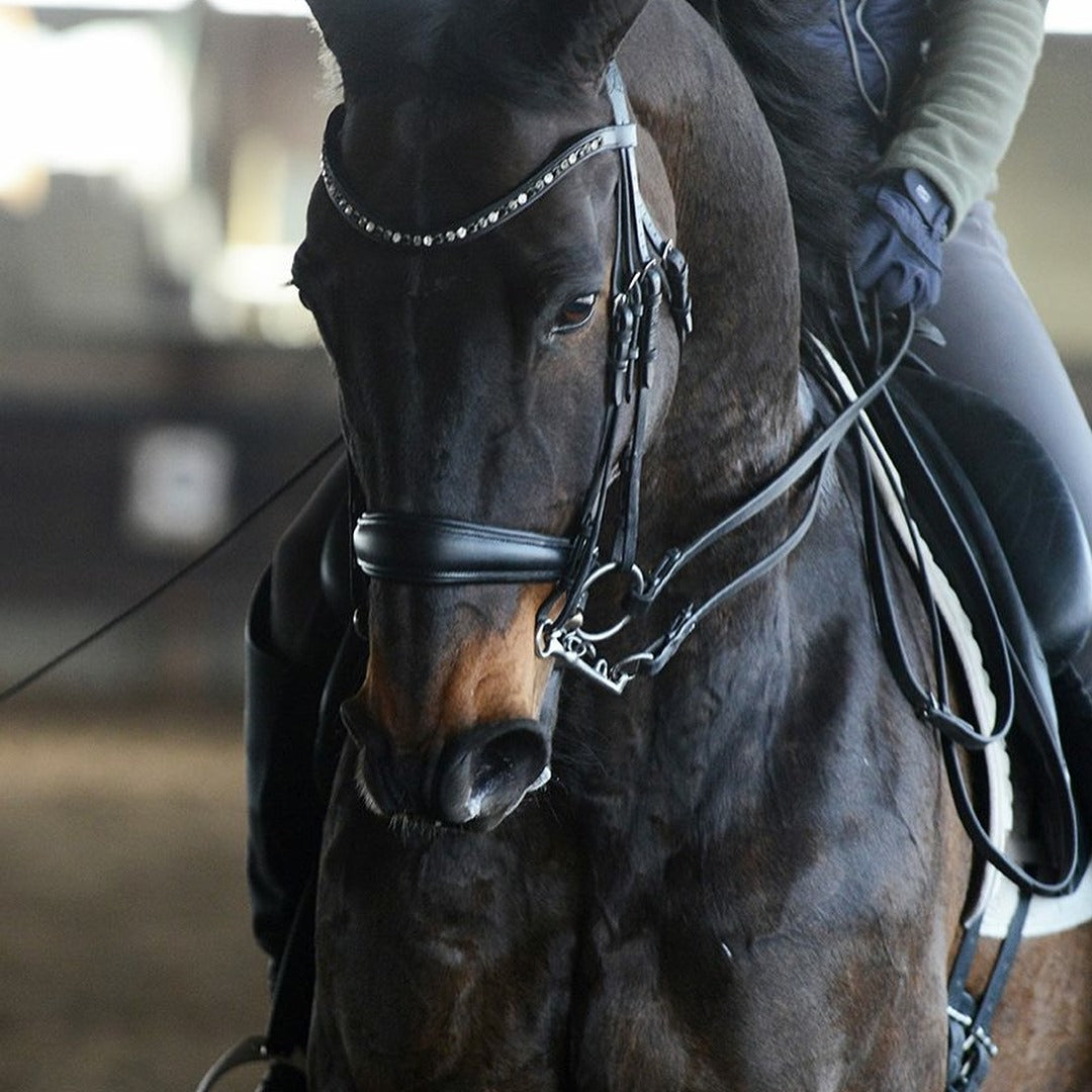 dressage collections endorsement from andrea bresee