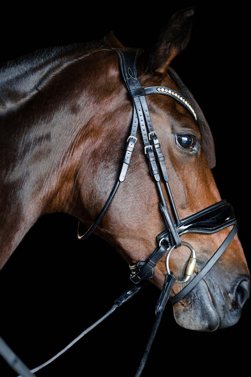 dressage collections perfect bridle fit profile view