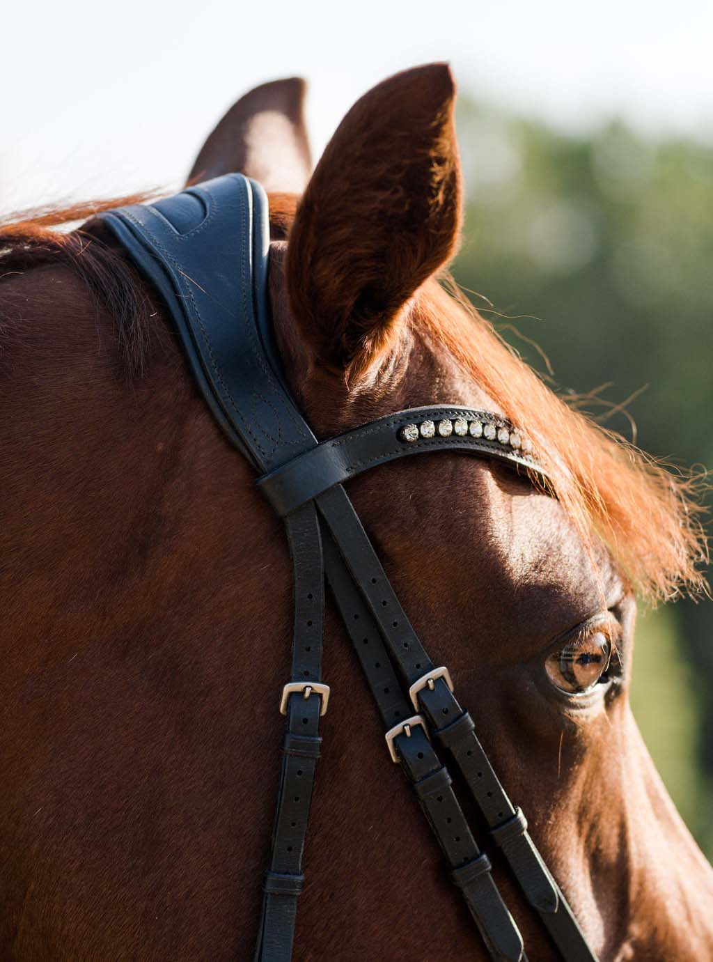 dressage collections bridle fitting jaw