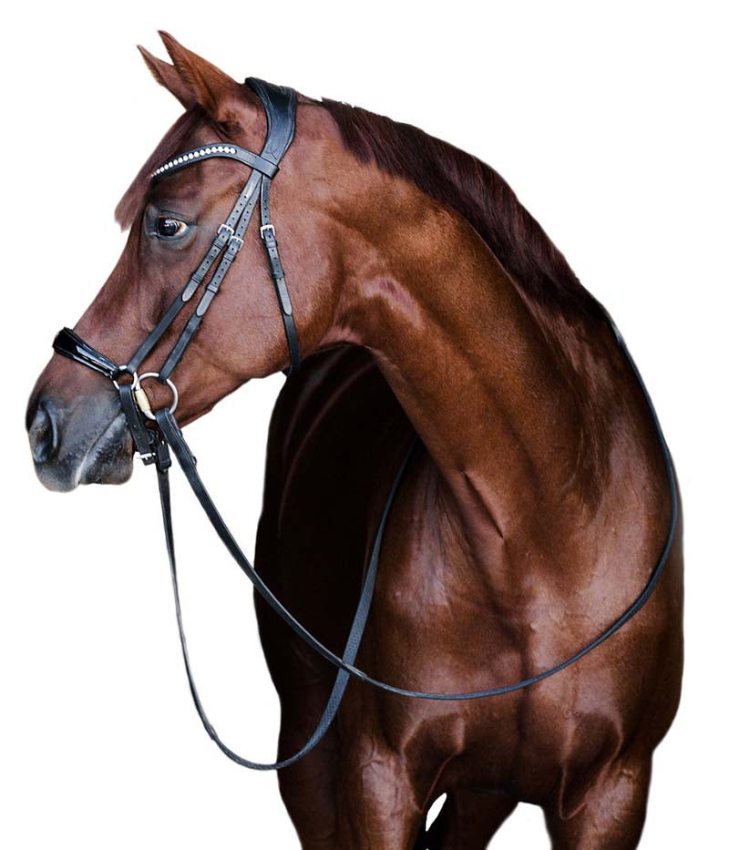 properly fitted bridle and browband