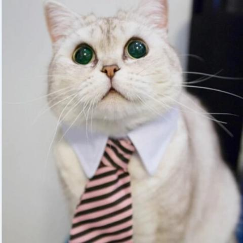 Load image into Gallery viewer, BUSINESS PET-TIE™