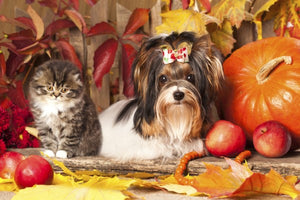 Prepare Your Pets Now, Say it Ain't So, Fall is Just Around the Corner.