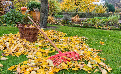 Lawn cleanup, leaves.