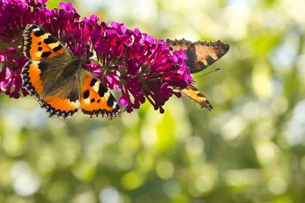 Butterfly garden ideas for your home.